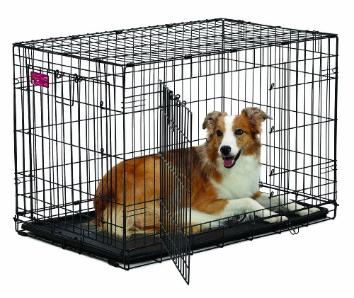 MidWest Homes for Pets Life Stages ACE Double Door Dog Crate, 36-Inch For Sale