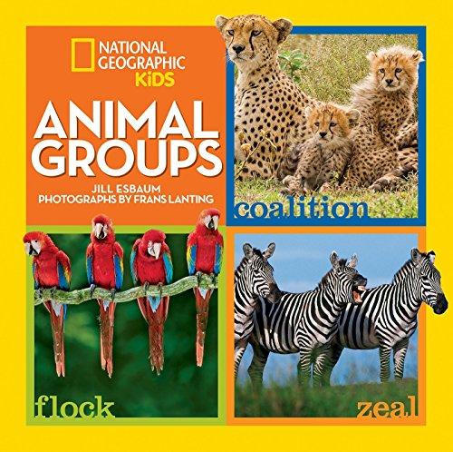 Group Animals - Animal Groups