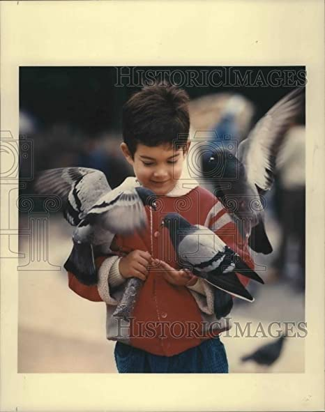 Vintage Photos 1990 Press Photo - Pigeones de alimentación para niño, Placa de Catalunya, Barcelona (España): Amazon.es: Hogar