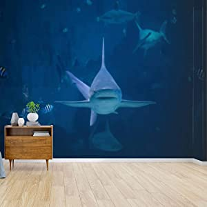 a silvertip shark swimming toward camera marine aquarium fishes Canvas Print Wallpaper Wall Mural Self Adhesive Peel & Stick Wallpaper Home Craft Wall Decal Wall Poster Sticker for Living Room