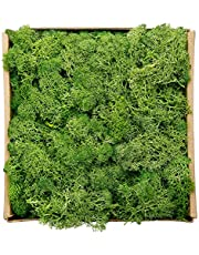 Reindeer Moss Preserved Floral Decorative Moss for Dressing Potted Plants, Fairy Garden, and Many Other Crafts, 7 Ounce (Green)
