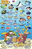 "Puerto Rico Reef Creatures Identification Guide Franko Maps Laminated Fish Card 4""x6"""
