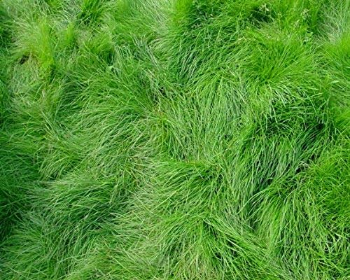 Top Grass Seeds