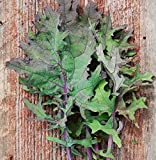 Red Russian Kale - 300 Seeds - Heirloom