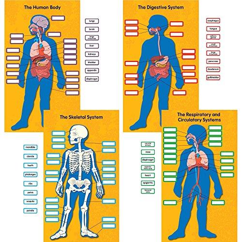 Carson-Dellosa 110178 Bulletin Board Set, Human Body, 13-3/4