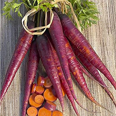 Purple Carrot Garden Seeds - Heirloom, Non-GMO, Vegetable Garden & Microgreens Seed