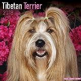 Tibetan Terrier Calendar - Dog Breed Calendars - 2017 - 2018 wall Calendars - 16 Month by Avonside