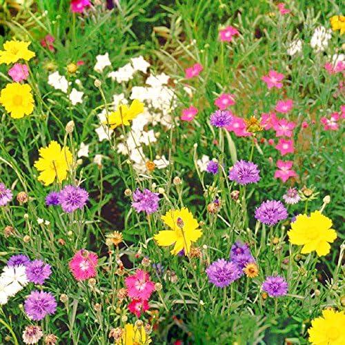 Fiori Di Campo.Un Pacchetto Di 300 Pezzi Misto Fiore Di Campo Semi Wildflowers