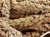AA Plus Shop Spray Millet Treat Feed for Birds