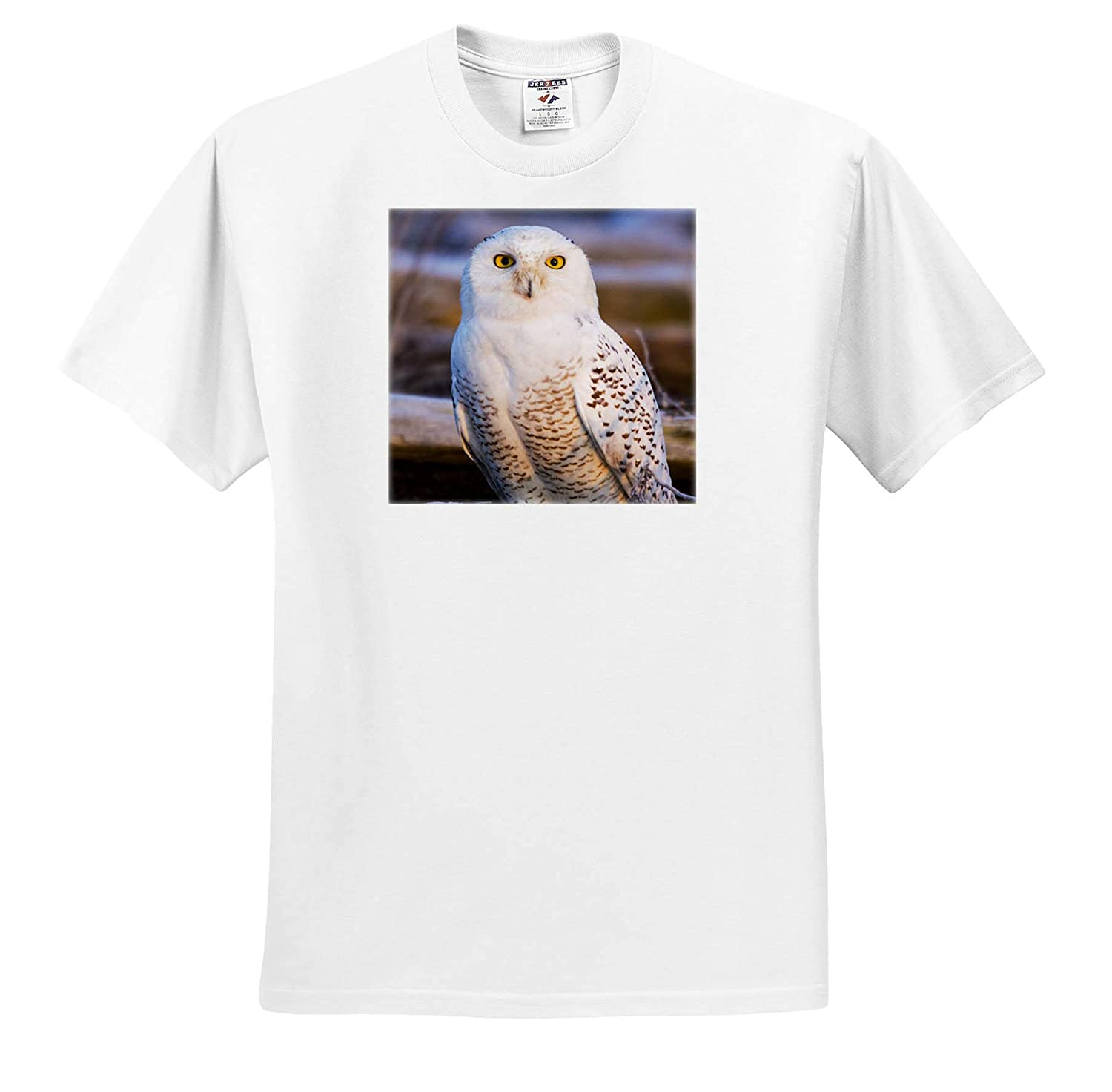 Owls Adult T-Shirt XL Canada Snowy Owl Waiting for Prey British Columbia 3dRose Danita Delimont ts/_313033