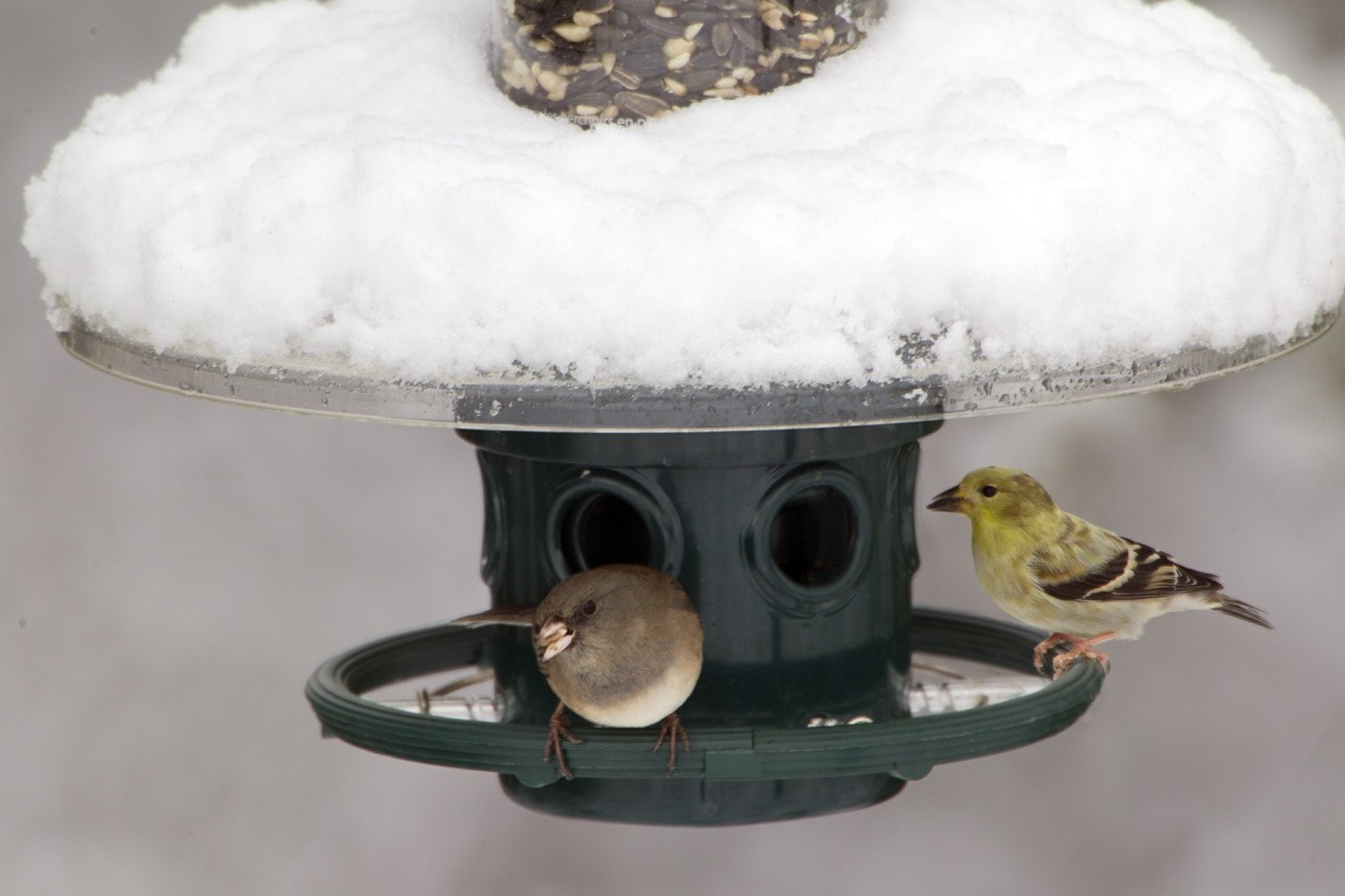 Squirrel Buster Weather Guard for the Squirrel Buster Plus Bird Feeder (feeder NOT included)