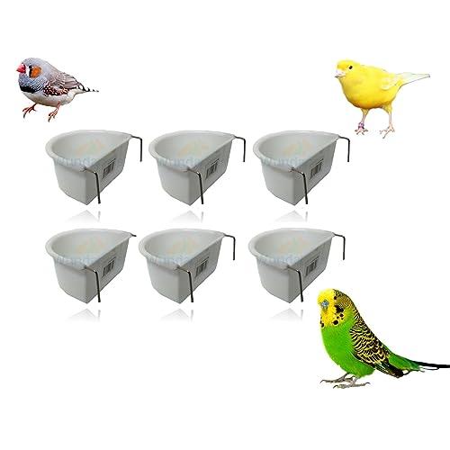 Swinging heaven Canaries