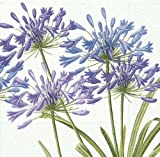 Entertaining with Caspari Dinner Napkin, Purple, Agapanthus, 20-Pack