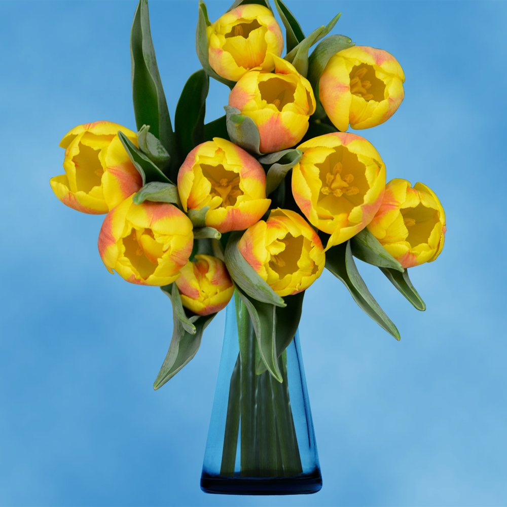 GlobalRose 30 Stems of Yellow Tulips Flowers - Fresh Flowers for Delivery by GlobalRose (Image #3)