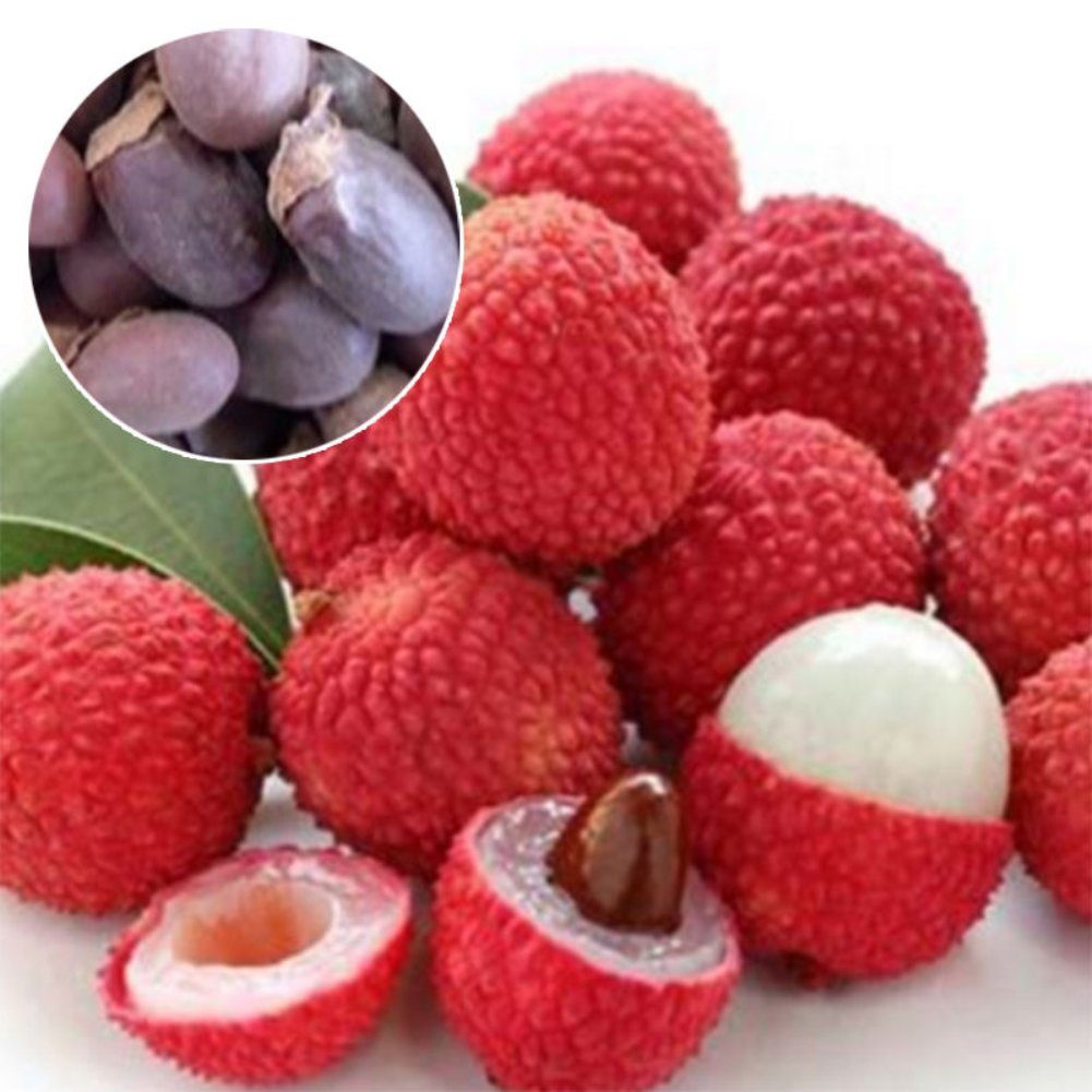 10Pcs Lychee Litchi Delicious Sweet Seasonal Fruit Tree Seeds Home Garden Plant Goodtimes28