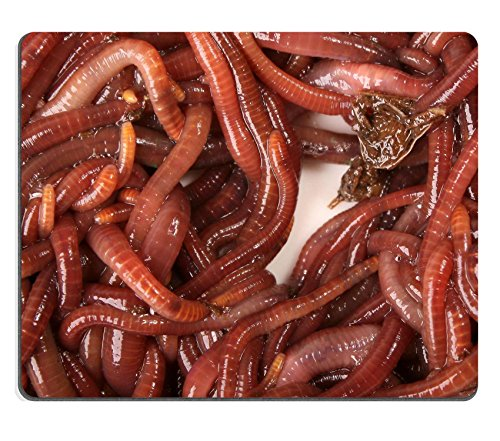 luxlady-gaming-mousepad-close-up-detailed-image-of-south-african-earth-worms-image-id-1787246