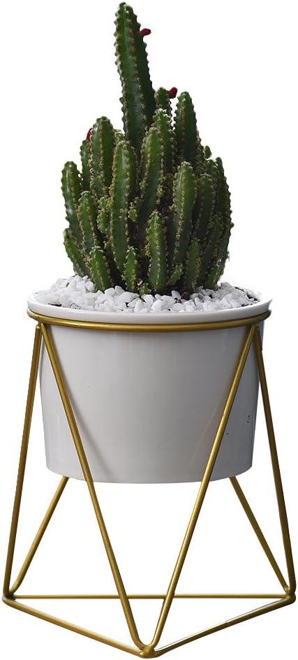Ceramica de cactushttps://amzn.to/2R16ZLa