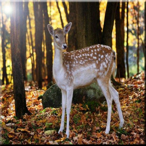 Rikki Knight Fallow Deer in Autumn Forest Design Ceramic Art Tile 12 x 12
