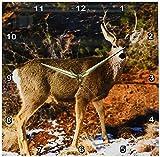 3dRose dpp_119943_2 Mule Deer Staring Wall Clock, 13 by 13-Inch Review
