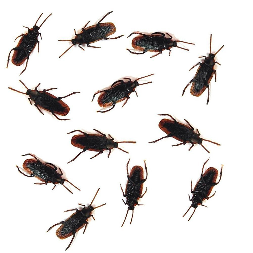 Amazon.com: 12- Fake Roaches Prank - Cockroach Bugs Look Real: Toys ...