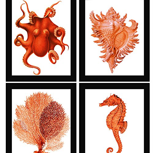 Red Orange Coral Sea Fan Octopus Conch Shell Seahorse Vintage Style Nautical Art Print Set of 4 Natural History Beach House Decor (Fan Sea Red)