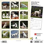 White German Shepherds 2020 12 x 12 Inch Monthly Square Wall Calendar, Animals Dog Breeds 6