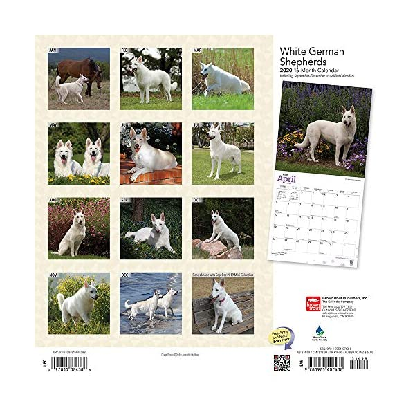 White German Shepherds 2020 12 x 12 Inch Monthly Square Wall Calendar, Animals Dog Breeds 2