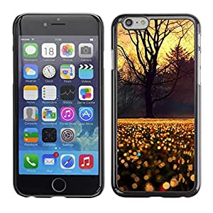 PC/Aluminum Funda Carcasa protectora para Apple Iphone 6 Plus 5.5 Sky Tree Rain Morning Sunrise / JUSTGO PHONE PROTECTOR