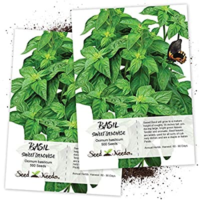 Package of 500 Seeds, Sweet Basil (Ocimum basilicum) Non-GMO Seeds by Seed Needs