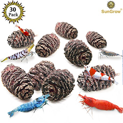 30 Naturally Grown, Pesticide-Free SunGrow Alder Cones for Shrimps --- Lowers pH level, Fight Bacteria and Prevent Fungal Infections in Aquatic Environment - Perfect for both big & small Aquariums