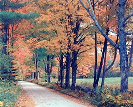 Forrest Trees Autumn Leaves Landscape Large Poster Art Print A0 A1 A2 A3 A4 Maxi