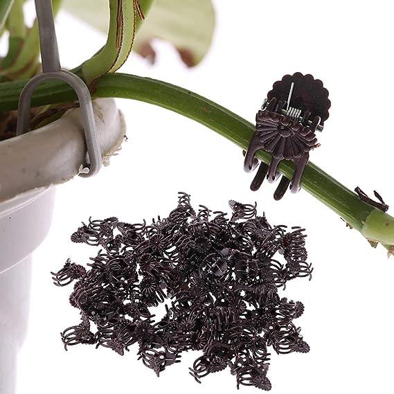 Ycncixwd 100 Unidades orquídeas de Flores de Margaritas Clips de ...