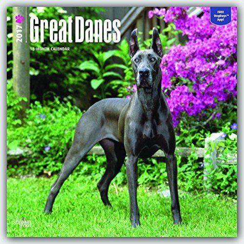 Great Danes - 2017 Calendar 12 x 12in