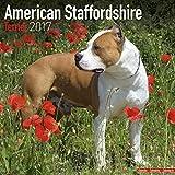 American Staffordshire Terrier - Dog Breed Calendar - Wall Calendar 2017