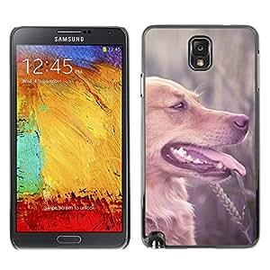 YiPhone /// Prima de resorte delgada de la cubierta del caso de Shell Armor - Labrador Retriever Field Brown Longhair Dog - Samsung Galaxy Note 3 N9000 N9002 N9005