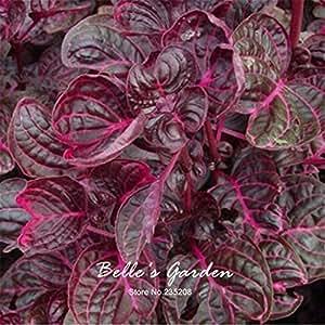 500pcs Red Semillas de Amaranthus Vegetable Seeds Green Good Taste vegetal jardín de Bonsai vegetal