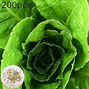 hudiemm0B Romaine Lettuce Seeds, 200Pcs Romaine Lettuce Seeds Nutritious Vegetable Garden Farm Yard Planting