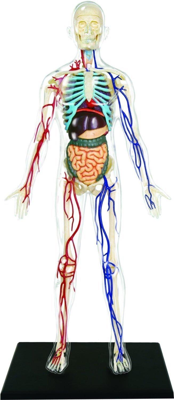 New 4D Puzzle Human Anatomy 3D Model Transparent Full Body