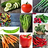 Heirloom Vegetable Seeds -10 Variety - Non GMO