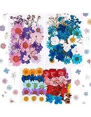 Xruison 101 st riktiga torkade pressade blommor naturliga torkade blommor flerfärgade naglar torra blommor för harts, scrapbooking, DIY ljus, smycken hänge hantverk tillverkning