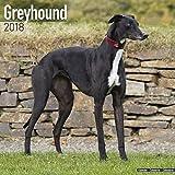 Greyhound Calendar - Dog Breed Calendars - 2017 - 2018 wall Calendars - 16 Month by Avonside