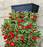 VertiGarden Wall Planter with Metal Frame and Brackets
