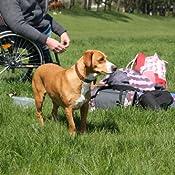 Tipps vom Hundeflüsterer: Einfache Maßnahmen für die