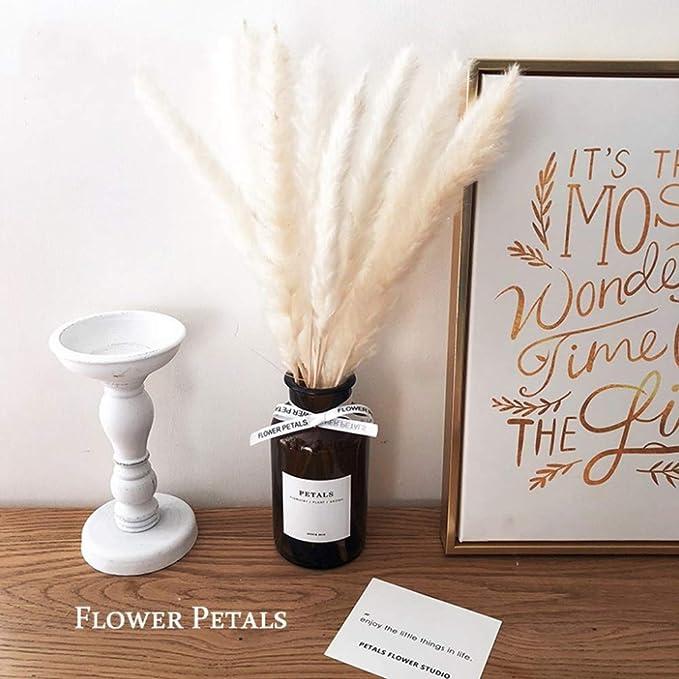 Beau Jour 45cm Natural Dried Pampas Grass 30pcs for Flower Arrangements Home Decor (White)
