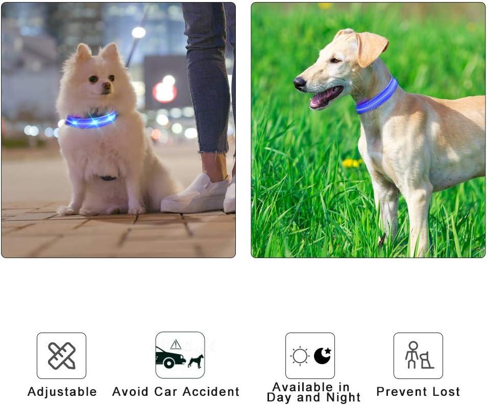 MASBRILL Collar para Perro Luminoso Recargable e Impermeable
