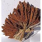 1 kg französische rote Kolbenhirse handverlesene Premium Qualität