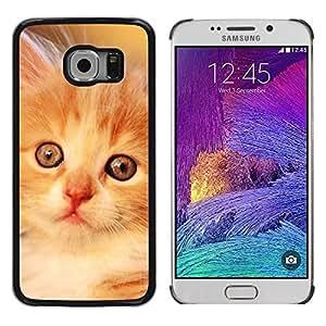 Be Good Phone Accessory // Dura Cáscara cubierta Protectora Caso Carcasa Funda de Protección para Samsung Galaxy S6 EDGE SM-G925 // Laperm Norwegian Forest Cat Selkirk