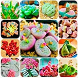 Lulan 100/bag Mix Succulent Seeds Lotus Lithops Pseudotruncatella Bonsai Plants Seeds For Home & Garden Flower Pots Planters