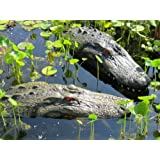 """22"""" & 28"""" Alligator Head Decoy Kit with Reflective Eyes For Canada Geese & Blue Heron Control"""