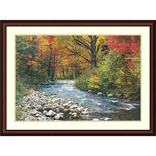 Amanti Art 'Forest Creek ' Framed Art Print